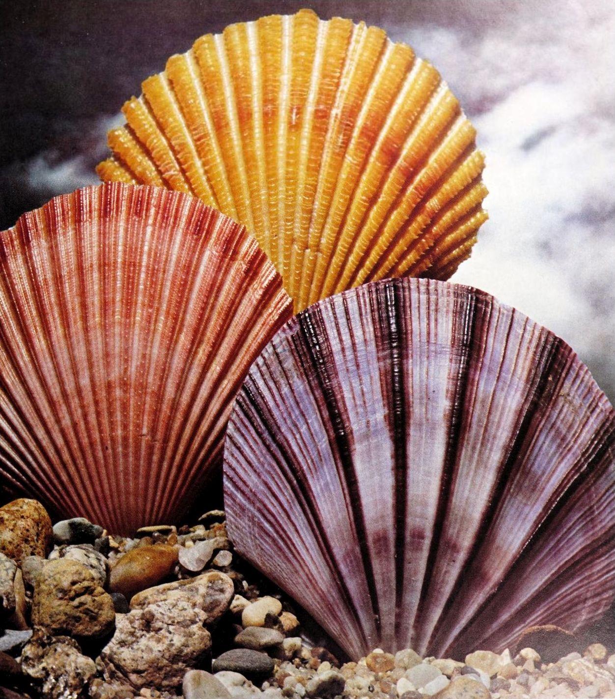 146 • Shells