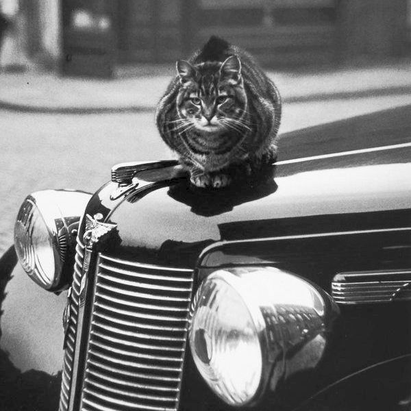 177 • Cats of London